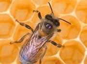 La Miel es el tratamiento ideal contra la tos